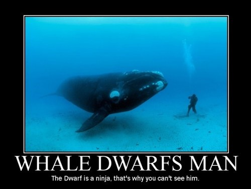 humans whales funny wordplay - 7537385984