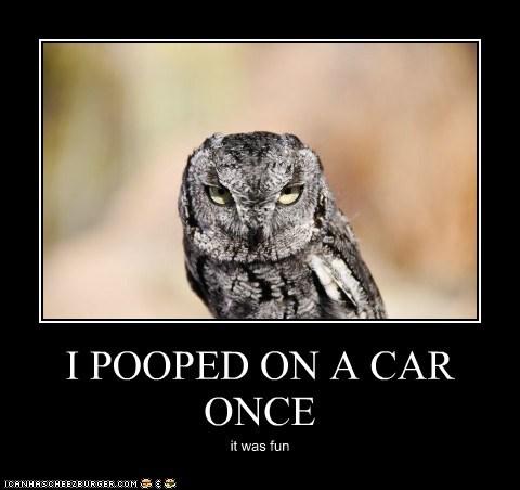 birds funny poop owls - 7537923584