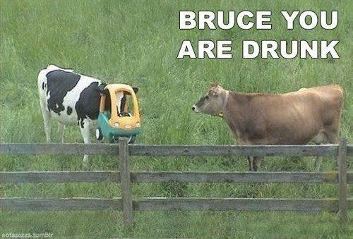 wtf cow drunk funny - 7537994752