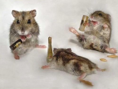 cute mice drunks funny - 7538010880