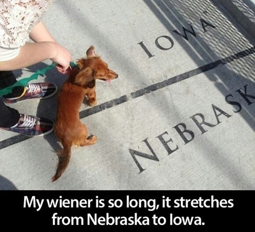 wiener,states,dogs,funny