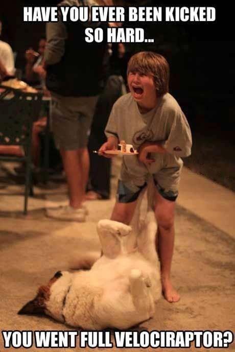 dogs jurassic park velociraptor - 7538146816