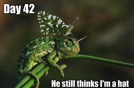 camouflage animals - 7538148352