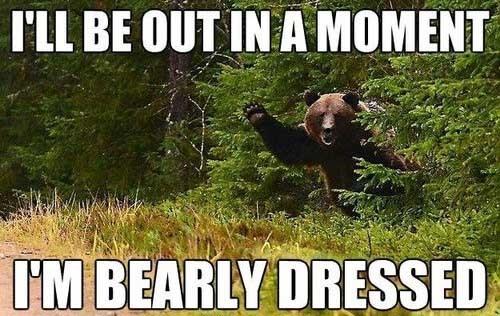 woods pun bear funny - 7538211840