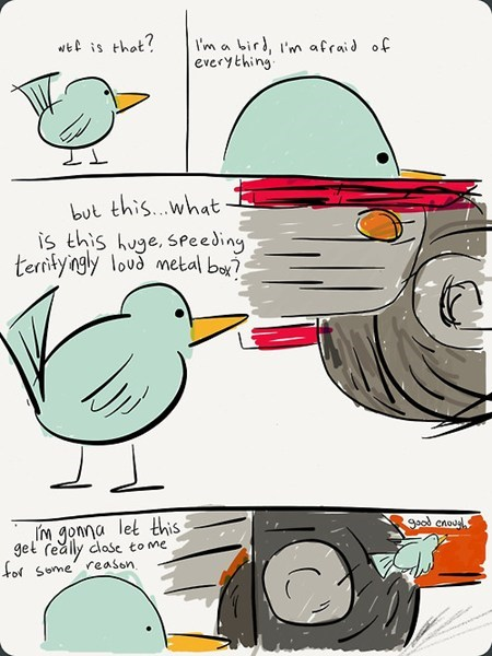 birds cars logic funny animals