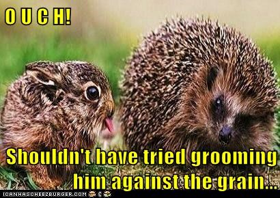 friends,grooming,hedgehog,funny