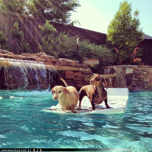 sausages summer cute pool texas - 7538819584