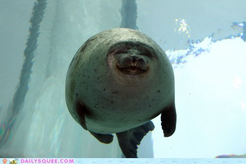 floating,seal,smile