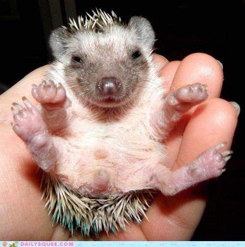 baby birthday hedgehog - 7540940800
