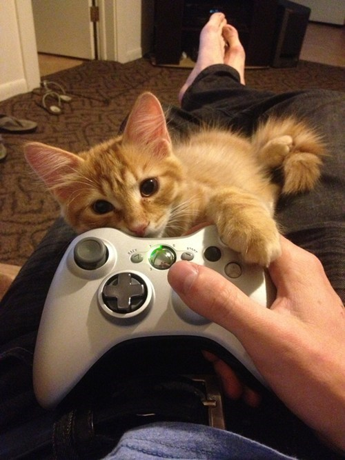 attention cute xbox video games - 7541351168