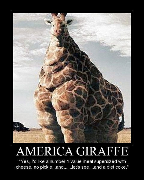 zoo,giraffes,america,funny