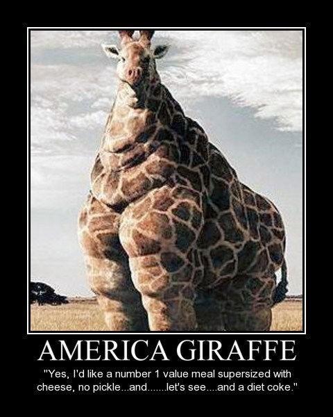 zoo giraffes america funny - 7541474304