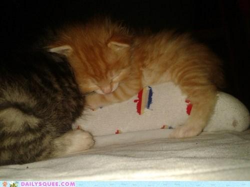 Pillow kitten foot - 7541558784