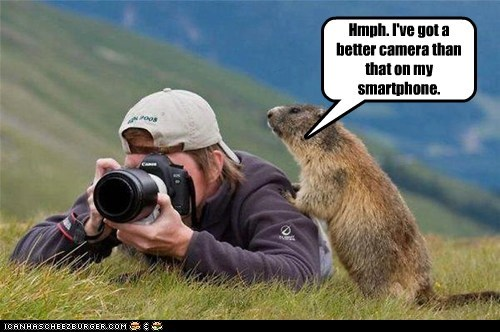 prairie dog,camera,funny