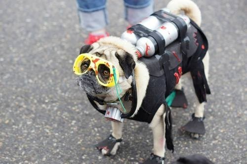 costume,goggles,pug,scuba gear