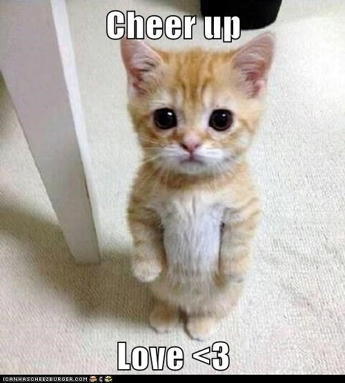 Cheer Up Love 3 Lolcats Lol Cat Memes Funny Cats Funny