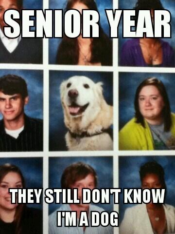 dogs school graduation animals - 7542347008
