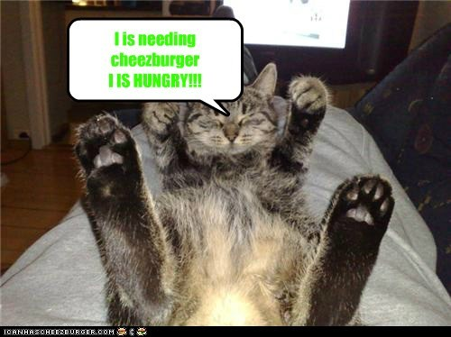 Cheezburger Image 7542361856