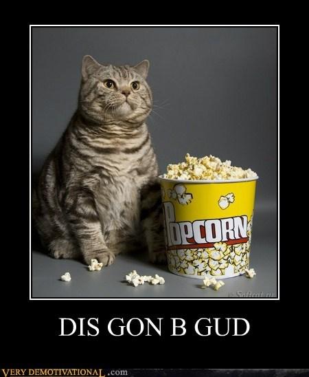 cat wtf Popcorn funny - 7543139584