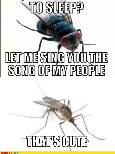 insects mosquitoes puns funny flies - 7543461888