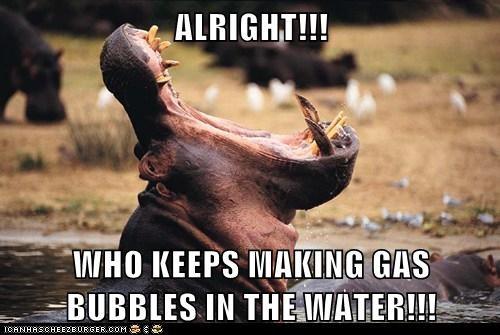 hippos farting puns - 7543466240
