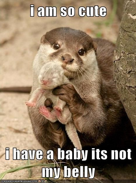 Babies cute otters - 7543808256