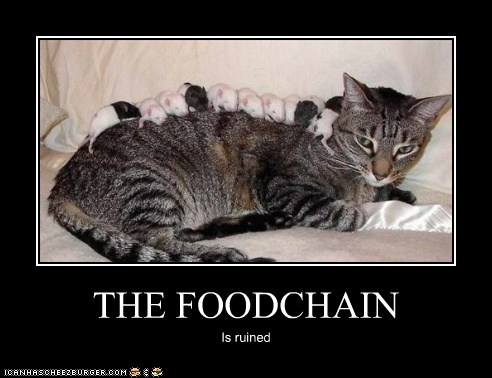 THE FOODCHAIN Is ruined