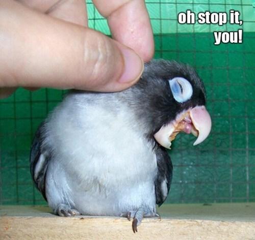 bird oh you - 7544148224