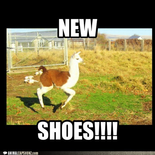 llamas happy shopping shoes