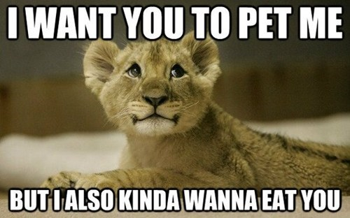 cute pet lion - 7544169984