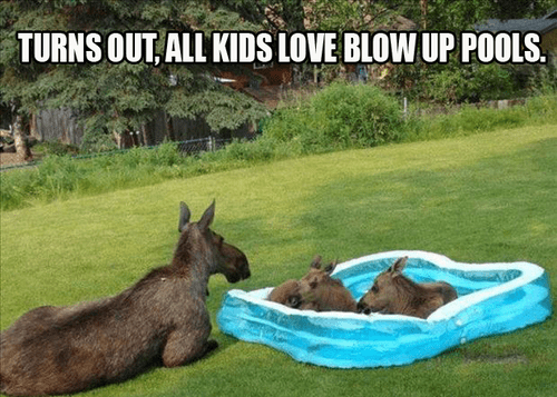 summer,moms,pools,moose,funny,g rated,parenting