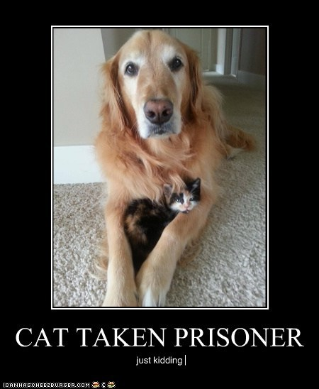 CAT TAKEN PRISONER just kidding