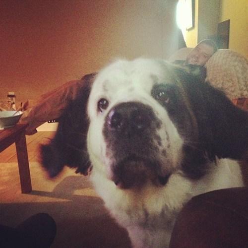 photobomb dogs funny - 7544763904