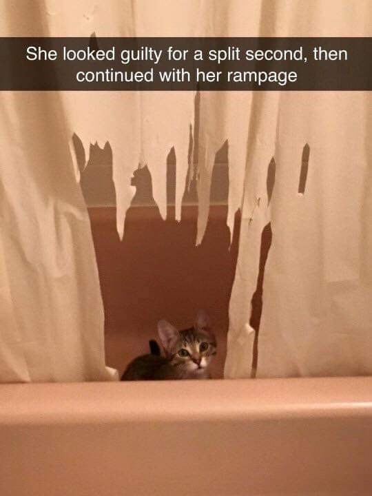 cat caught red-handed caught in the act cute cute cat guilty - 7544837