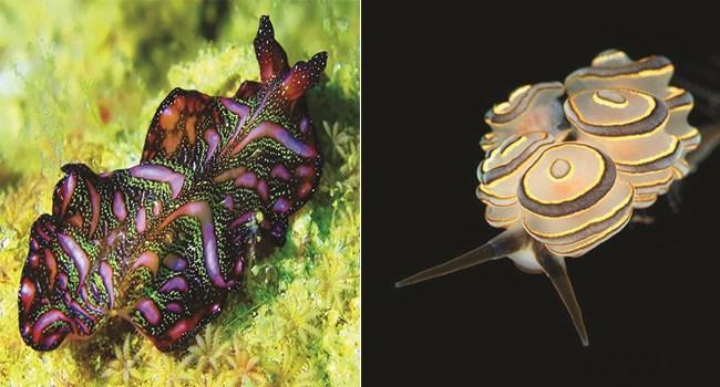 beautiful colorful slugs