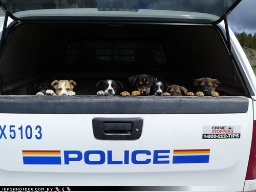 busted puppies cute police - 7545535744