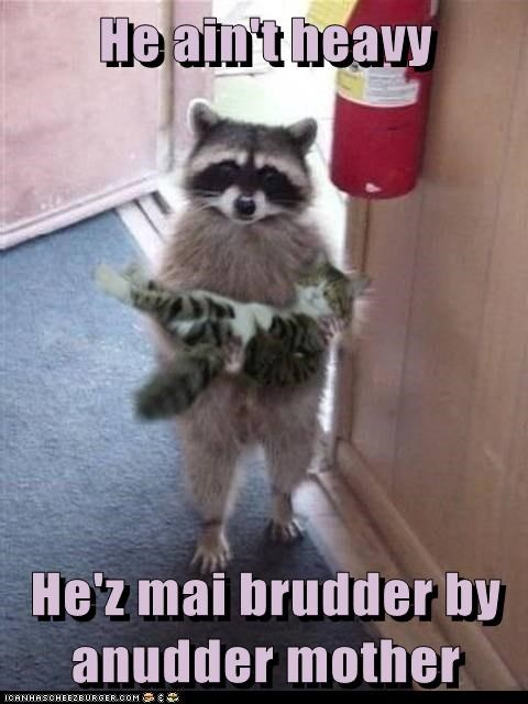 Cats cute tails raccoons related - 7545555968