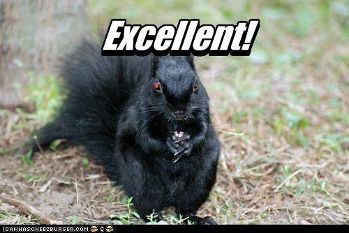 excellent,squirrel,evil,funny