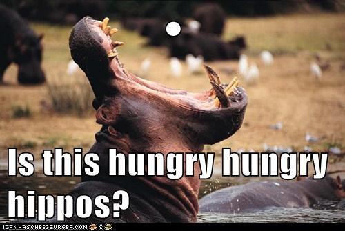 Cheezburger Image 7546106368