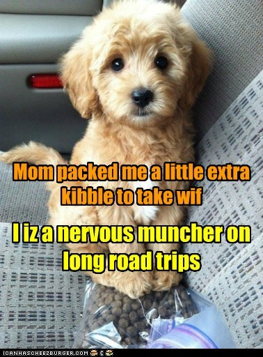 puppy cute road trips vet food