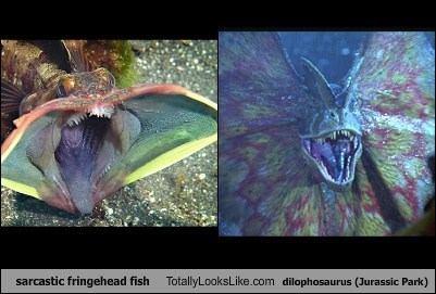 sarcastic fringehead critters totally looks like dilophosaurus funny - 7546309888
