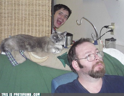 photobomb,troll,Cats,funny