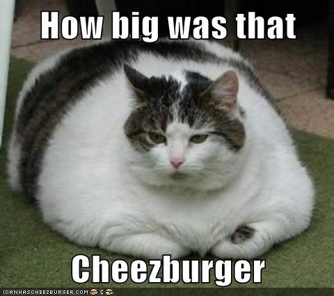 Cheezburger Image 7547288576