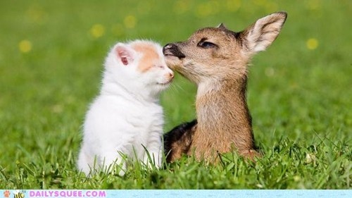 Interspecies Love,deer,love