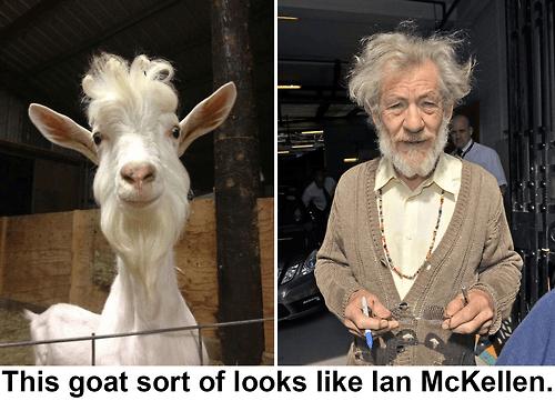 goat,ian mckellen,gandalf