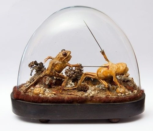 wtf swords taxidermy funny frog