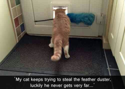 steal,foiled again,feather duster,funny