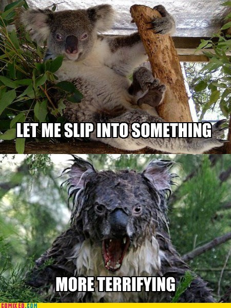 nature scary critters koalas funny - 7548395776
