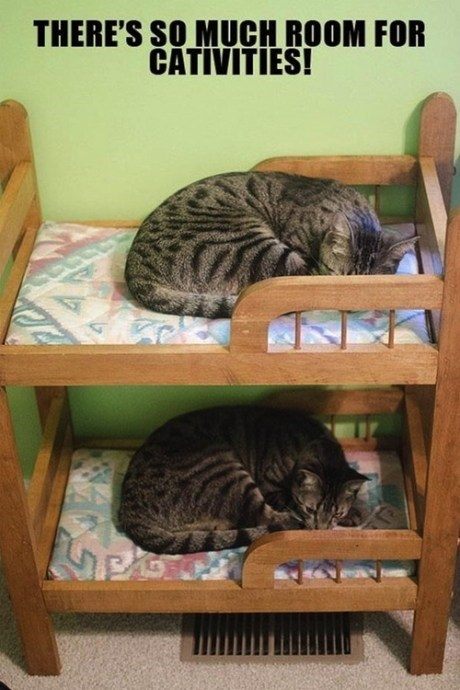 stepbrothers bunk beds puns Cats funny - 7548397568