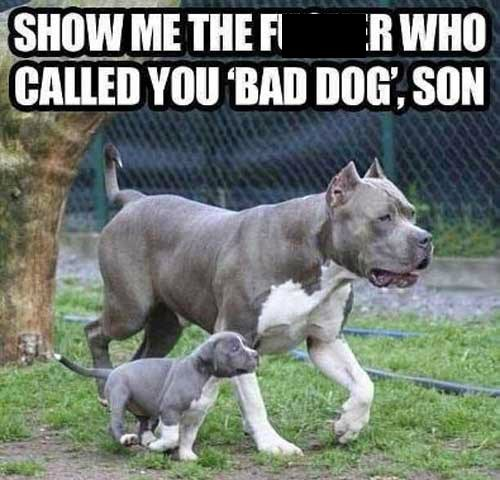 dogs protective dads funny - 7548406528